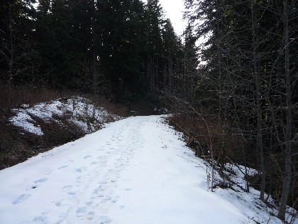 Hikers' tracks, plus a rather large cougar print, gave me pause