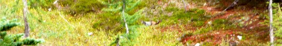 A marmot (center if you squint) waddles across Entiat meadow